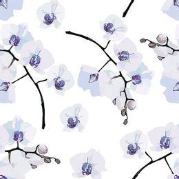 papel-de-parede-orquidea-fundo-branco